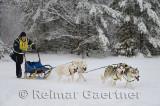 341 4 dog sled 16.jpg