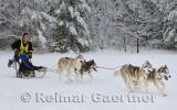 341 4 dog sled 18.jpg