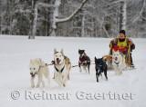 341 6 dog sled 3.jpg