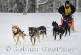 341 6 dog sled 4.jpg