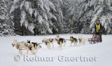 341 6 dog sled 15.jpg