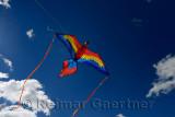 348 Kite 2.jpg