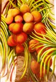Cocconuts