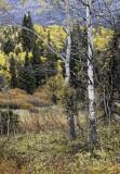 Yukon Warmth