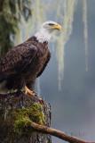 Eagle Vigil
