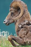 Ram Everlasting