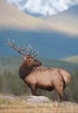 Elk Ridgeline
