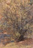 Autumn Slendor