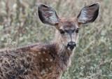 Deer Moment