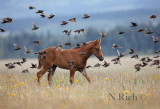 Foal and Birds