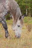 Foothills horse portrait