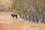 Open Pasture