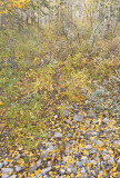 Autumn Creek bed