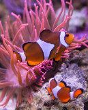 Nemo (sep14)