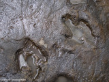 IMG_6040001.jpg - Dinosaur Footprints | Lesothosaurus