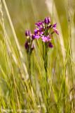 IMG_2292001.jpg - Flora of Lesotho