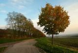 le Kochersberg en automne