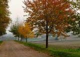 le Kochersberg en automne #2