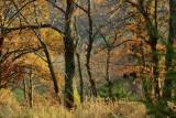 la forêt de Bernardvillé