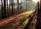 un chemin de lumière