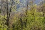 la forêt au printemps