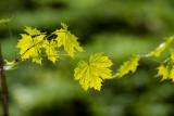 New leaf, New life