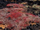 vegetation on the lava