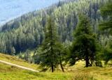 la forêt autrichienne