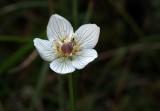 kleine weisse Blume