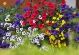 Tyrolean flowered balconies