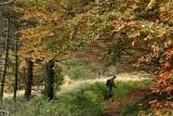 lussureggiante foresta