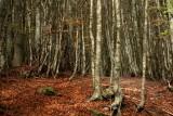 una foresta impenetrabile