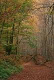 un boschetto in autunno