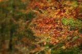 le foglie sono rame e oro