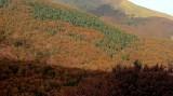 la montagna boscosa
