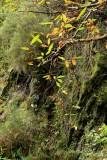 un bosco di castagni