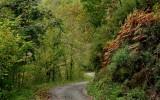 une forêt de chataignier