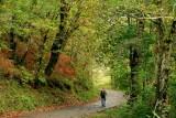 bellissimi boschi di castagna