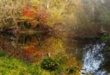 la forêt de Rhinau