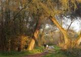Balade en forêt rhénane