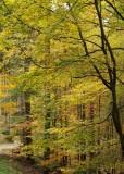 la forêt du Nideck # 2
