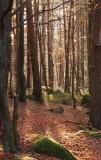 la forêt du Mt Ste Odile