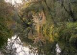 reflets, forêt du Rhin