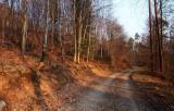 une forêt en Lorraine