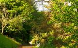 la forêt de Maisongoutte