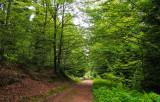 la forêt de la Pierre-Percée