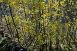 la forêt de St Christophe