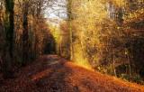 la forêt de Daubensand