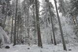 la forêt du Champ du Feu