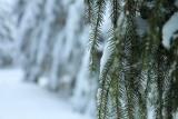 ambiance hivernale
